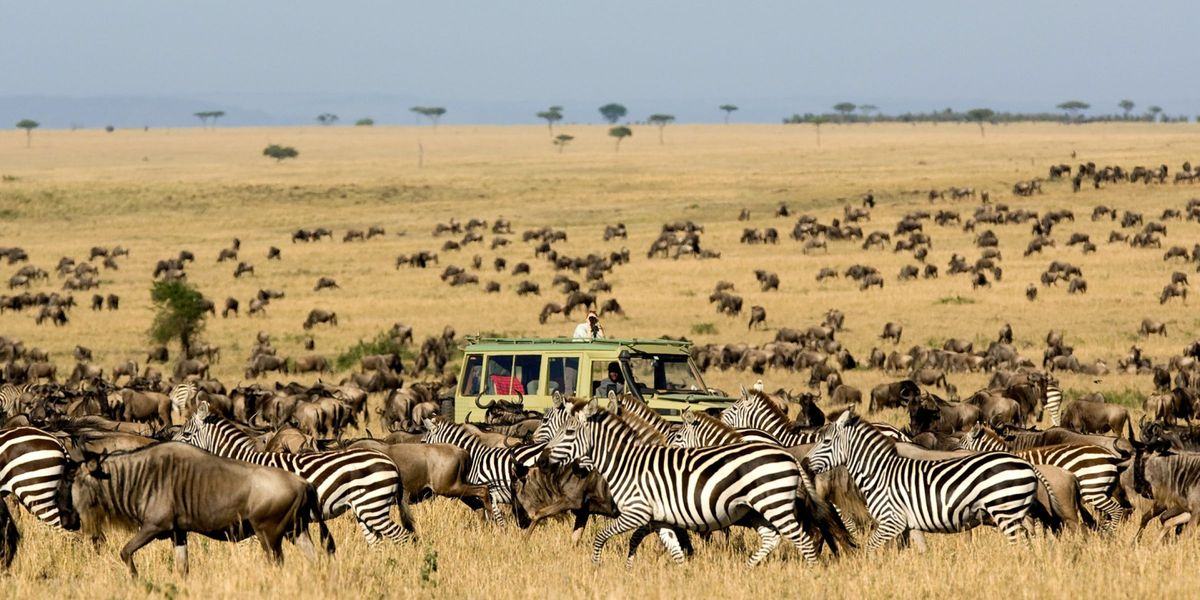 Migration Serengeti Safari